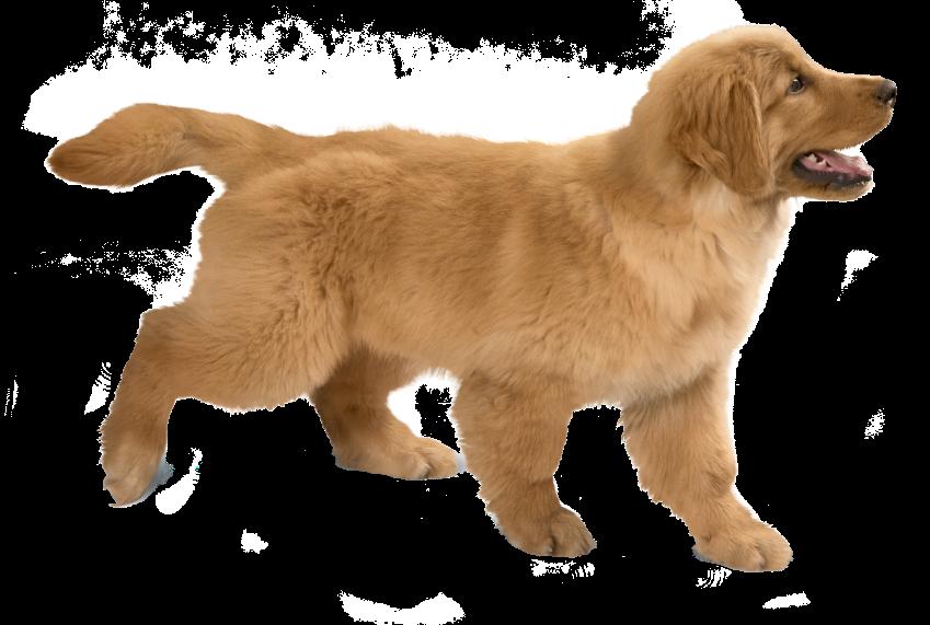 perro en un pop up